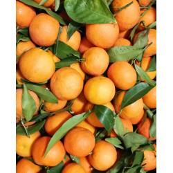 Greckie mandarynki