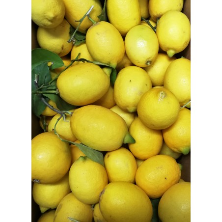 Greckie cytryny
