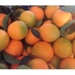 Pomarańcze z grecji