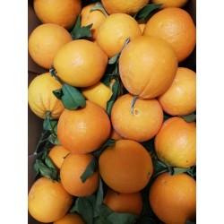 Greckie pomarańcze