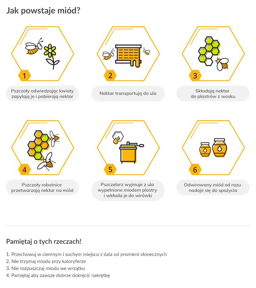 Jak powstaje miód? Infografika