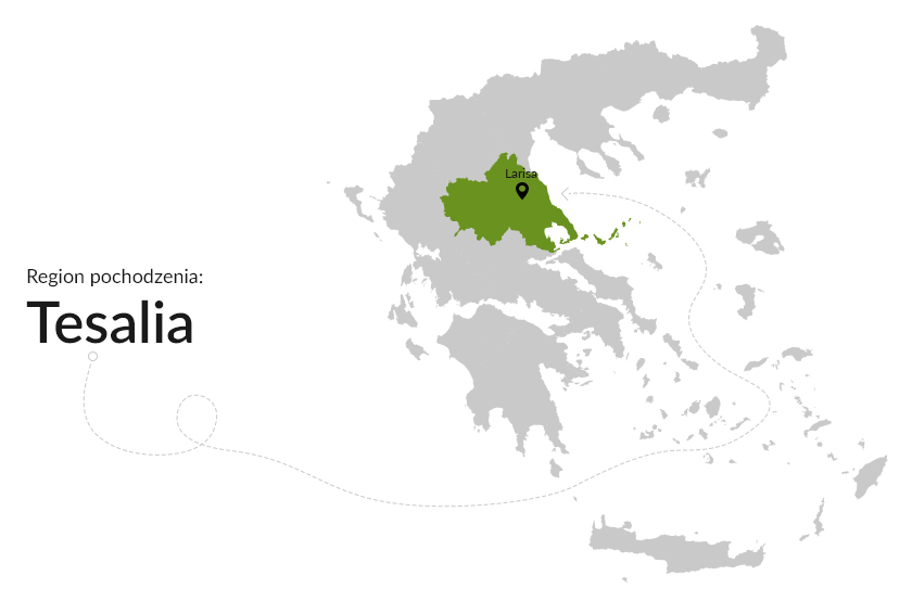 Region pochodzenia: Tesalia